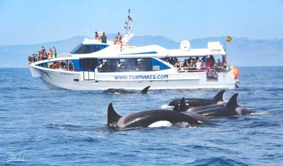 cadix-avec-enfants-excursion-bateau-dauphins-baleines